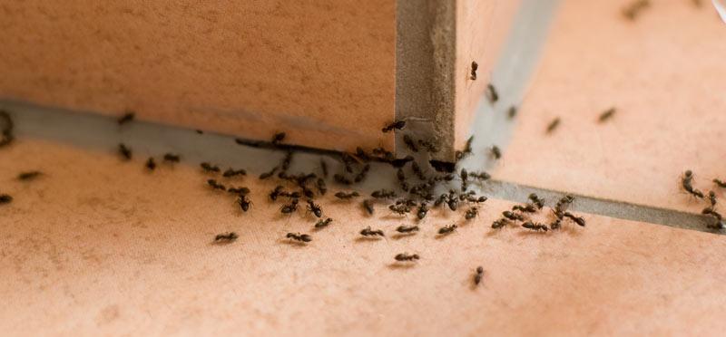 ants-main