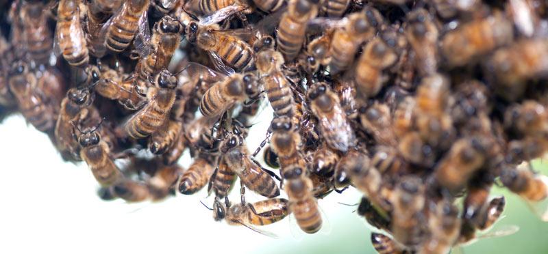 bees-main